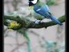 Oiseaux de mon jardin à Sundhoffen