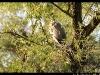 Petite-camargue-alsacienne-DSC_0369m-border