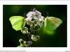 Farfalle è filangrocche di Corsica