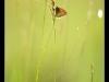 Macro papillons.
