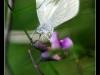 Orchidée et macro à Gueb.