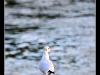 Rencontres au bord de l'eau à Colmar 10 2013
