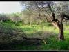 Tocco-da_Casauria--_DSC0156m-border