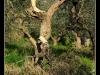 Tocco-da_Casauria--_DSC0168m-border