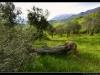 Tocco-da_Casauria--_DSC0179m-border